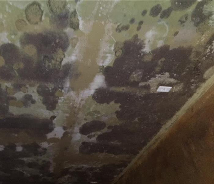 Widespread Mold Growth